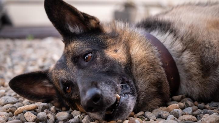 Под Гатчиной пес принес хозяевам ногу мужчины, убитого полгода назад