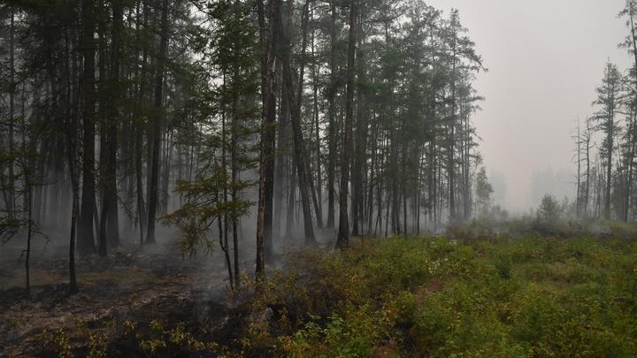 Донские леса закрыли для посещений до 15 октября