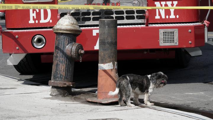 Паника, крики, десятки раненых: В Нью-Йорке посетители торгового центра спасаются от страшного пожара