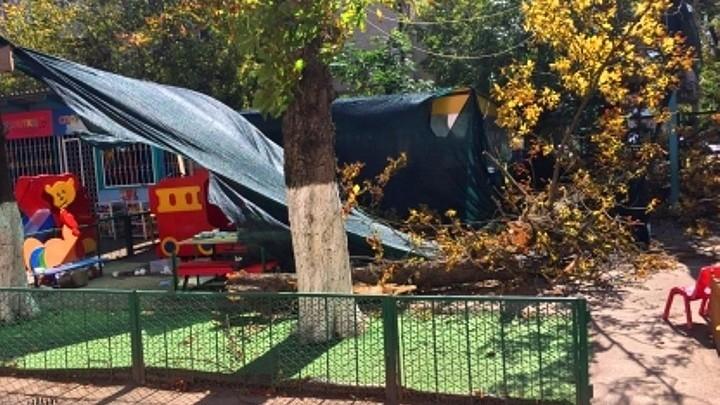 Родители погибшей девочки, на которую упало дерево в детсаду, обжаловали приговор