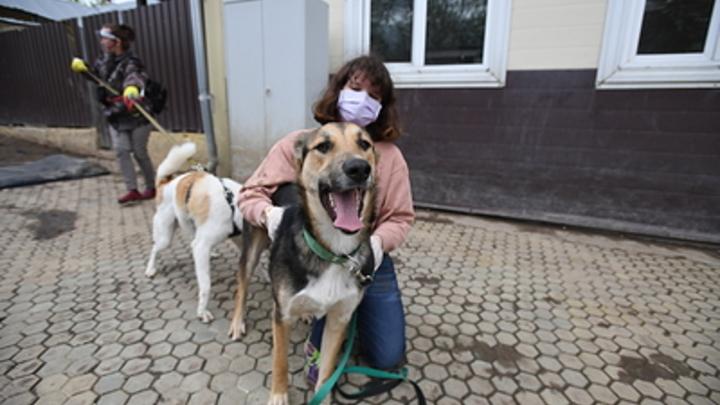 Просроченную еду - на корма животным: В Госдуме нашли способ помочь приютам в условиях пандемии