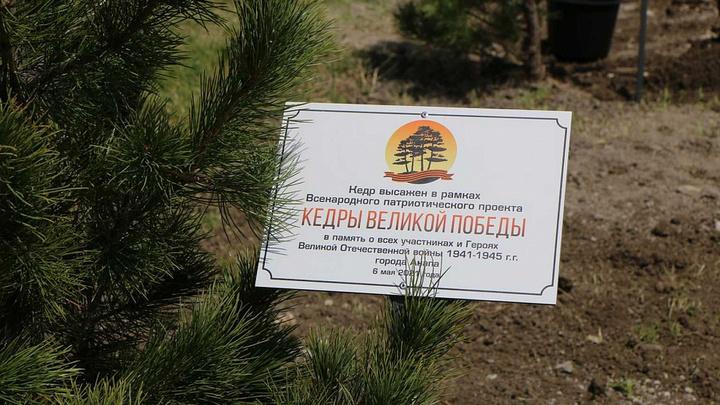 В память о 22 июня: В Новороссийске высадили 80 кедров с именами героев Великой Отечественной войны