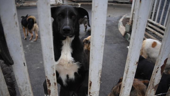 В Чите появится новый приют для 400 бродячих собак