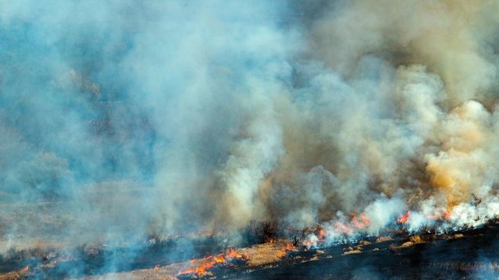 В Екатеринбурге в ЦПКиО горят тополиный пух и сухая трава