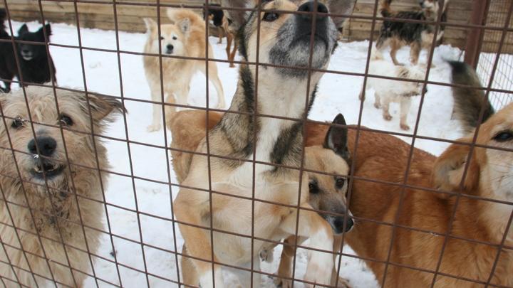 Новые приюты для животных будут построены в Свердловской области