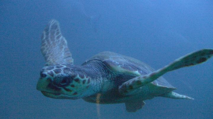 На пляж в Испании выбросило двухметровую черепаху весом 700 кг