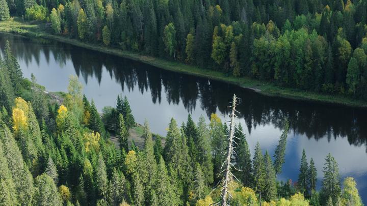 Как спасти русский лес от Китая: Эколог предложил чёткий план