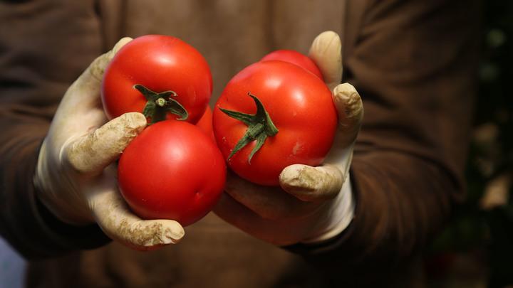 Вслед за молочкой Россельхознадзор нацелился на белорусские томаты