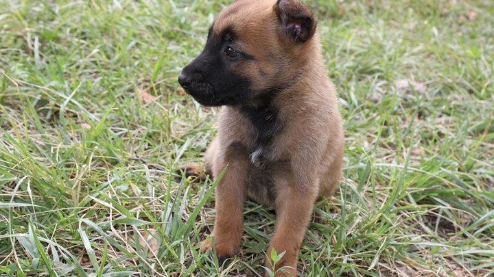 Больше суток в заточении: Бродячий щенок пережил испытание и обрёл дом