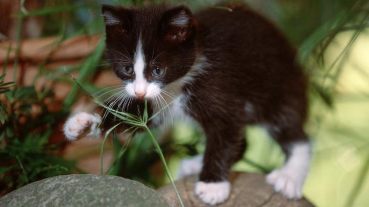 Блогер оправдался за законсервированного котёнка, но было поздно