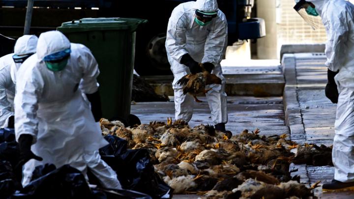 Россельхознадзор запрещает импорт мяса птицы из Европы с 8 февраля