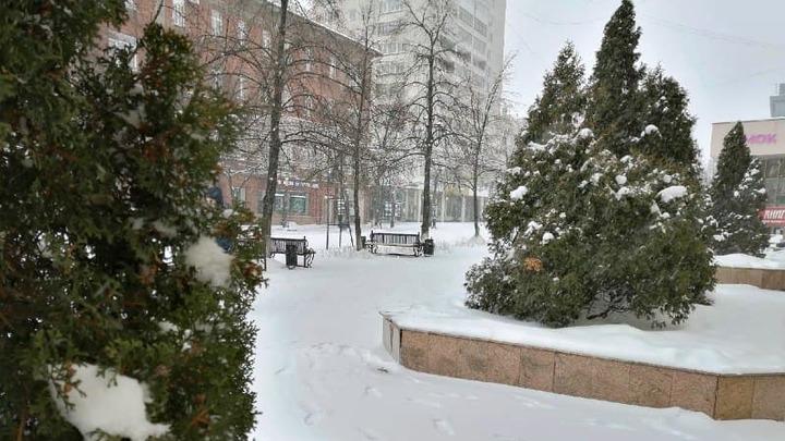 Для старых новогодних елок в Челябинске нашли место