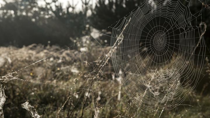 Побережье Греции покрыли толстые паучьи сети в сотни квадратных метров
