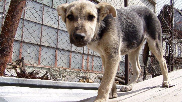 Жительница Новосибирска оставила щенка на морозе у дверей приюта