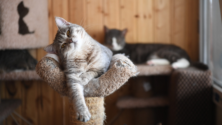 Владельцы двух и более кошек нарушают закон, сами того не зная