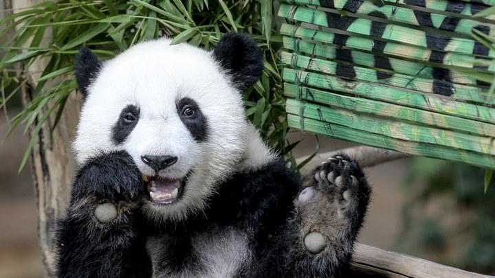 Готовятся даже панды: Московский зоопарк закрылся из-за шторма