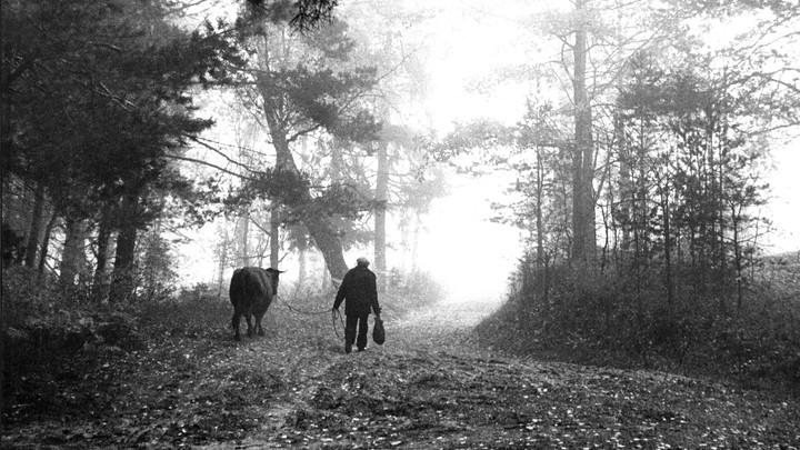 Жив, здоров и невредим: Белорусский пенсионер три месяца блуждал по лесу
