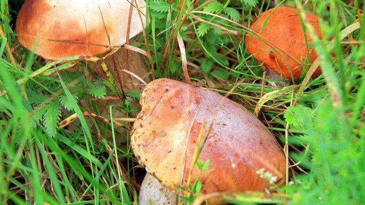 И грибы тоже рыдали, отползая в лес: Хайп вокруг голодовки Соболь перешел в неожиданную плоскость