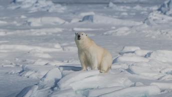 Доминирование в Арктике: Россия с атомными ледоколами выходит на первый план