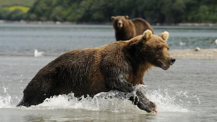 Британских болельщиков пугают перед ЧМ-2018 голодными русскими медведями