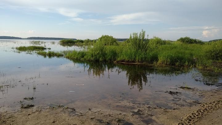 В Московской области утонул 8-летний ребенок