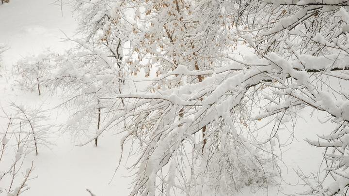 Надо обратно – замерзнем: Исследователи показали три версии, что могло случиться с группой Дятлова – видео