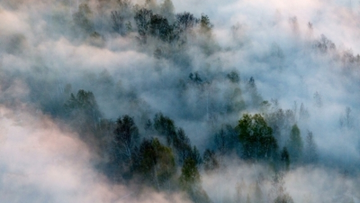 В Канаде леса горят добрее и честнее: Военкор показал, как активист сравнивает лесные пожары в России и Канаде