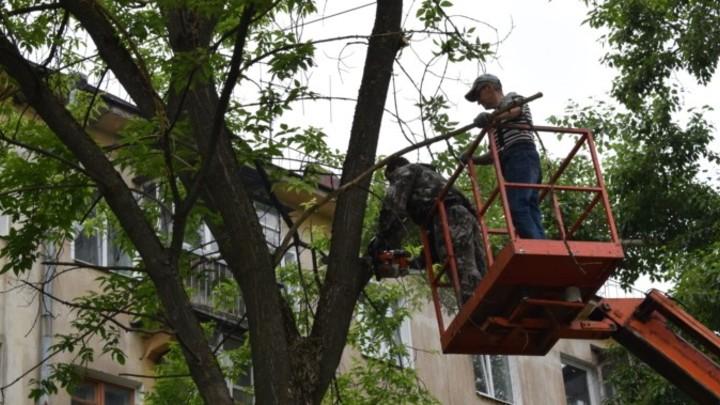 Ликвидацию старых деревьев в Иванове начали с улицы Пролетарской