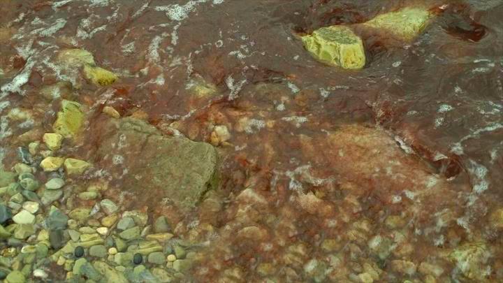 Росприроднадзор объяснил, почему в районе Новороссийска море стало красного цвета