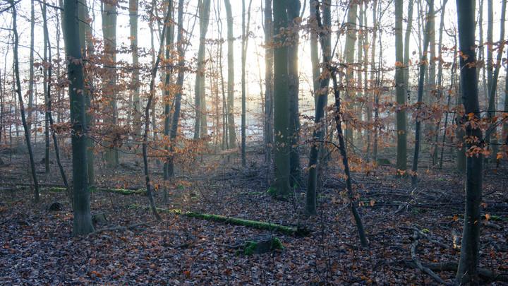 В лесу Новороссийска нашли повешенную мумию