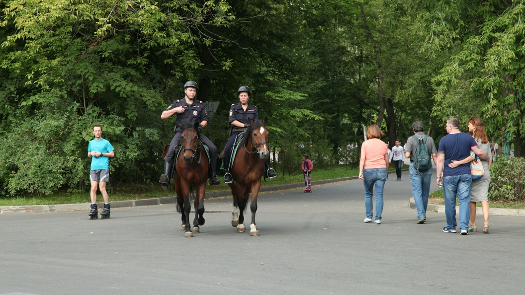 Конная полиция Москвы запросила орловских лошадей на 2 млн рублей