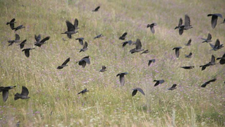 Британский таблоид The Sun написал про массовую гибель птиц в Новосибирской области