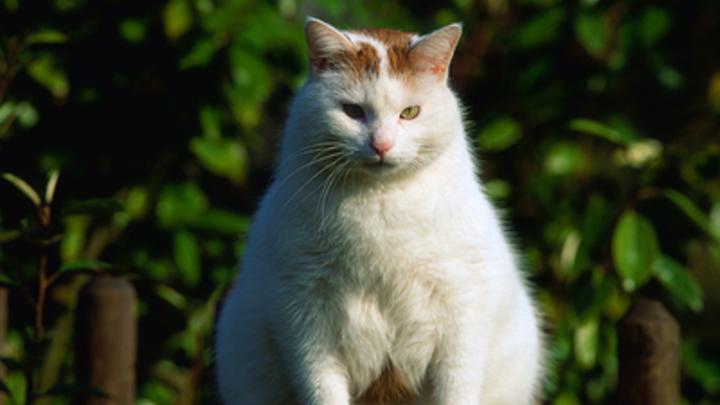 В российской столице пассажира непустили всамолет из-за толстого кота