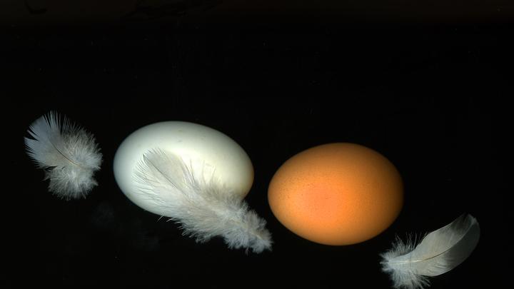 Как найти свежие куриные яйца в магазине? В Роскачестве дали универсальный совет