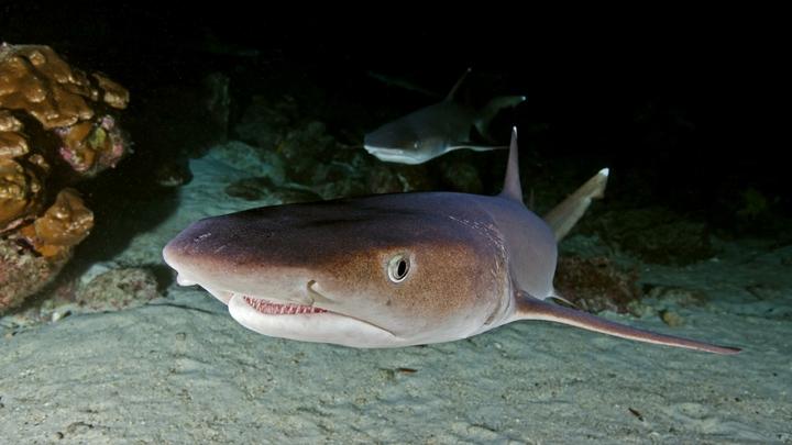 Американский рыбак на камеру расправился с акулой-нянькой, напавшей на него
