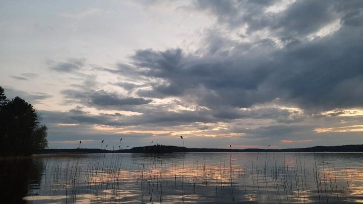 Строительство порта в Приморске уничтожает заказник: жители скидываются, чтобы выкупить землю
