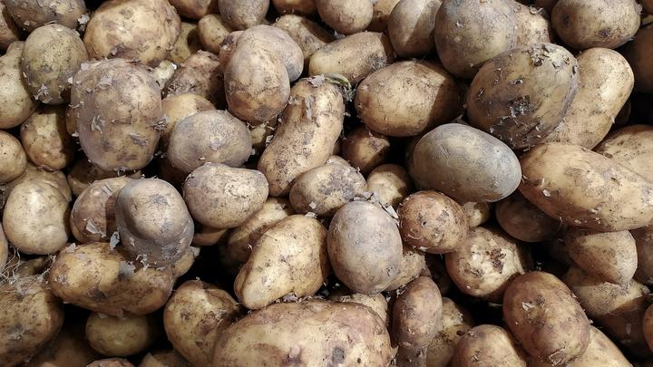Россия может запретить картофель из Азербайджана: В овощах обнаружили инфекцию
