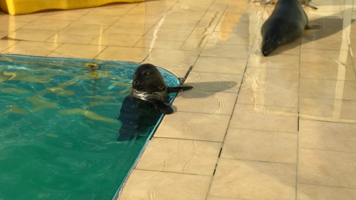 У пяти нерпят «выпускной»: тюленята в Петербурге готовятся к жизни на воле
