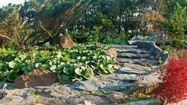 В Ботаническом саду Владивостока нашли обломки военного самолета