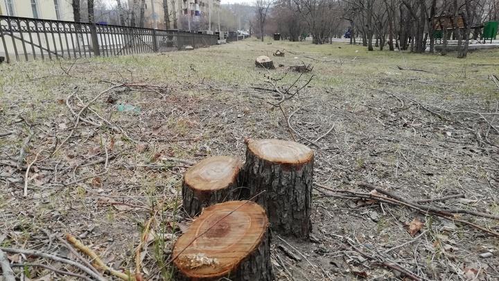 Законность вырубки деревьев на улице Горького в Чите проверит прокуратура