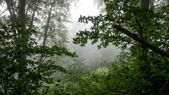 Приносили людей в жертву в лесах Ленобласти: что известно о московских сатанистах и их жертвах