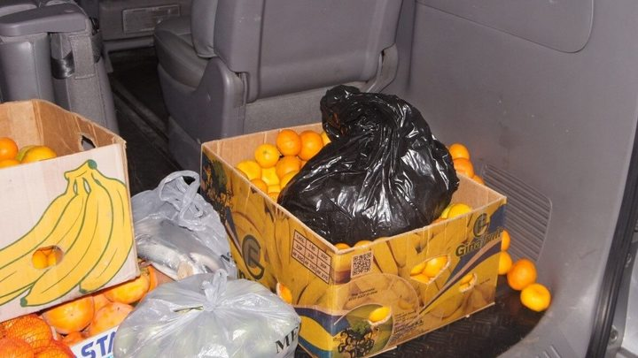В Сочи на границе обнаружили спрятанную в мандаринах контрабандную рыбу