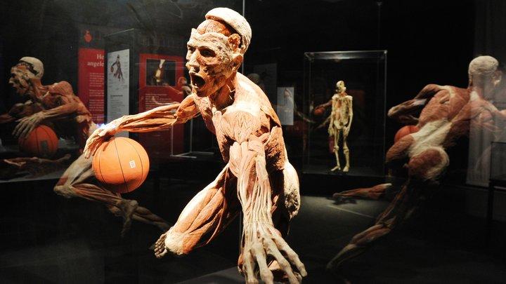 Выставка трупов на ВДНХ: тела для экспозиции могли вывезти из России