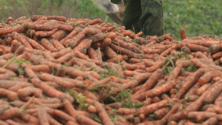 Морковка вся в грязи, лук гнилой...: Тайны Сбермаркета, о которых лучше не знать
