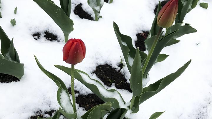 Восьмое марта со снегом на глазах – погода на длинных выходных не обрадует Петербург