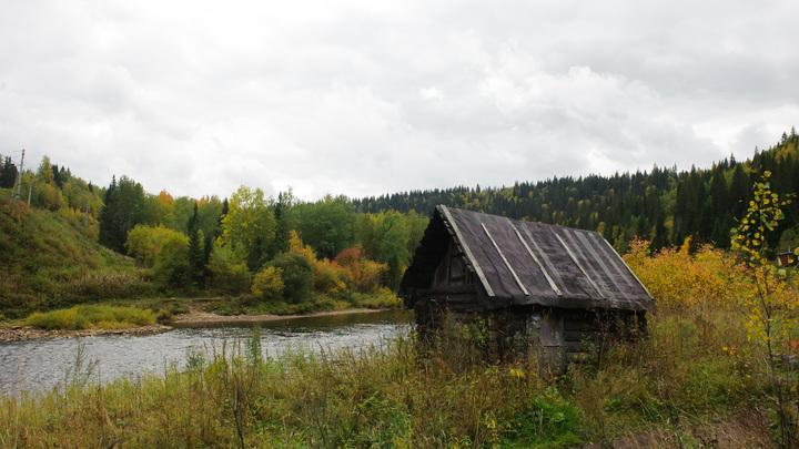 Каждое дерево на счету: Названы сроки инвентаризации лесов России