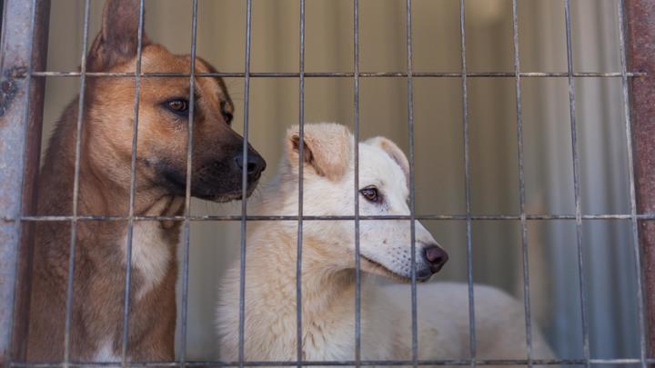 В Германии разоблачили новый фейк о ЧМ-2018 в России: Кто на самом деле убил собак