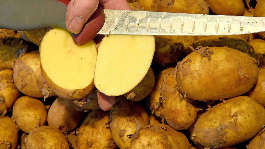 Картофель назвали средством исцеления от гепатита B
