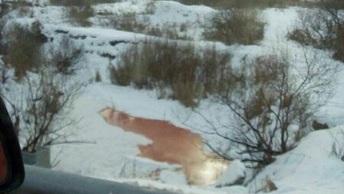 Экологи взяли пробы в кровавой реке под Тюменью