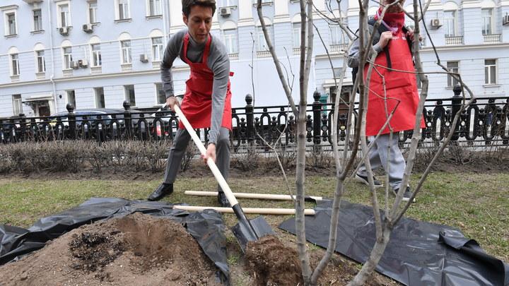 На высадку деревьев приходили целыми семьями: В Подмосковье прошла традиционная акция Лес Победы